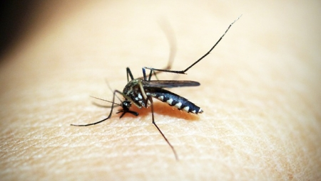 Προληπτικά μέτρα και μέσα προστασίας για τον ιό του Δυτικού Νείλου